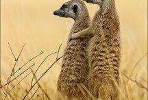 Animals / #top animali