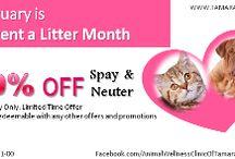 Vet Offers & Discounts