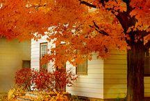 Autumn / Missing autumn...
