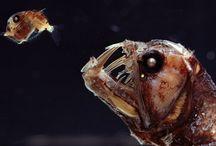 Mostri del mare / splendide e misteriose creature del #mare e degli #abissi