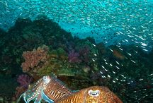 Cuttlefish and more