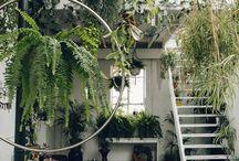 plants that i love