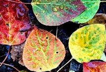 Pictura frunze
