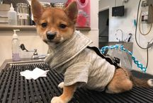 Pets Fab Fashion / Is your Pet a Fashionista?