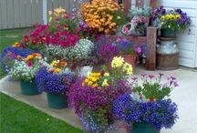 Potted flower gardens