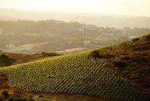 Cal-a-Vie Vineyards