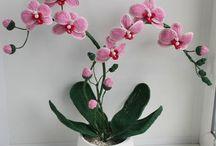 orhidea2