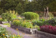 Rudding Park Kitchen Garden / Over 100 different herbs, salads, edible flowers and fruits are grown to offer guests something different when they dine at Rudding Park.