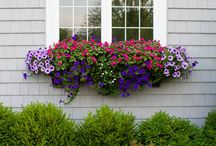 Containers and window boxes / Lush mixes of annuals that form gorgeous groupings