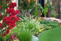 All about FLOWER and GARDEN