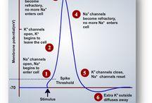 Neuronogy