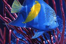 Sotto l aqua