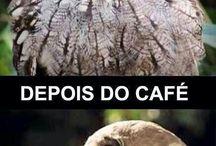 Cofee / Cofee