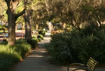Winter Park FL / My favorite place on earth :) / by Rosalyn Diehl