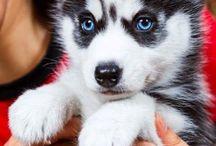 dog & co.