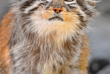 Adorable animal pictures / by Charles Rowlan Jr