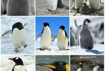 Animals I Love / A board covered with the animals i find most adorable, especially pandas, penguins and cats!