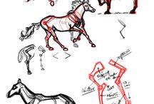 ANATOMY STUDIES / ESTUDIOS ANATOMICOS