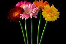 Bhubaneswar Florist / Send flowers to Bhubaneswar, Online flower delivery in Bhubaneswar, Cake delivery in Bhubaneswar, best florist in Bhubaneswar, same day flower delivery in Bhubaneswar. http://www.onlineflowersgift.com/