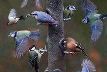 Pássaros / Liberdade de voar num horizonte qualquer, liberdade de pousar onde o coração quiser. Cecília Meireles