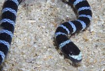 Snakes / Snakes