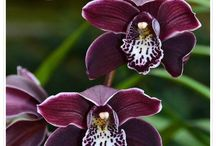 Orchid colour combos.... for new orchid builder bundle