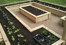 Garden -  Raised Beds / gardening, raised beds