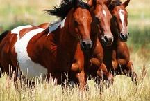 Quarter Horse Love Paint