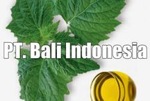 Supplier patchouli Oil Indonesia