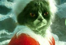 GRUMPY CAT / by Linda Rager-Ewald