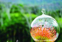 Bunte Nadelkissen - Deko und DIY (Leucospermum) / Leucospermum sticht ins Auge. Farbe, Form und Anmutung dieser Blume machen jedes Blumen-Arrangement interessant