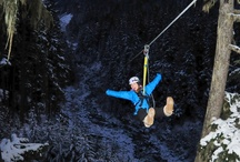 Ziptrek Whistler Blog / Latest posts from our Whistler blog / by Ziptrek Ecotours