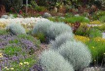 Australian Native Gardens / Beautiful Native Gardens for Small Spaces