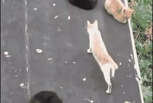 Котики и животинки
