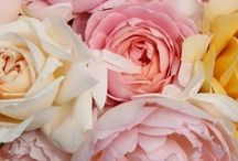 flori..frumusete