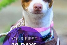The First 30 Days / The first 30 days after adoption are crucial for trust building and routine setting. Here, everything you need to make that transition go smoothly. / by Petfinder.com