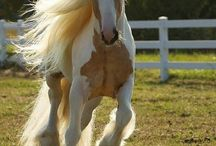 HORSES / Horses are my life! I can't imagine a world without horses they are such amazing creatures