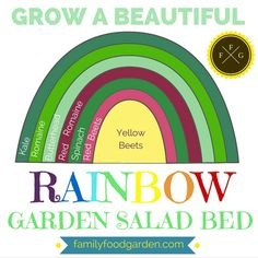 Grow a beautiful rainbow garden salad bed!