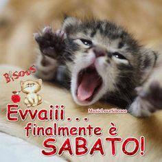 Evvai…finalmente oggi è Sabato! – Musiclovesilence