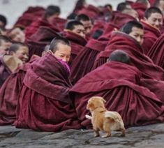 Photo by Tag someone you'd love to visit Tibet with! Animals And Pets, Baby Animals, Funny Animals, Cute Animals, Kids And Pets, Nature Animals, Wild Animals, Tier Fotos, Jolie Photo