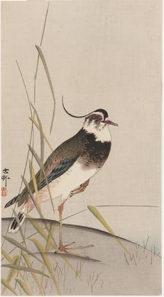 Plover  early 20th century    Ohara Koson (Shoson) , (Japanese, 1877 - 1945)  Meiji era     Woodblock print; ink and color on paper  H: 34.2 W: 18.7 cm   Japan