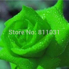 Hot selling 100pcs green rose Chises Rose seed flower seed bonsai plant DIY home garden free shipping