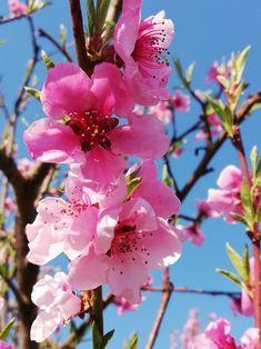 Spring, Flowers, Plants, Beautiful, Florals, Planters, Flower, Blossoms, Plant