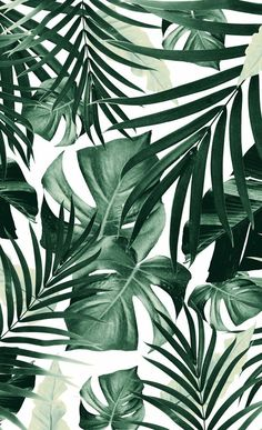 Tropical Jungle Leaves Pattern Window Curtains to wallpaper around windows Art Prints Leaves Wallpaper Iphone, Plant Wallpaper, Tropical Wallpaper, Aesthetic Iphone Wallpaper, Aesthetic Wallpapers, Pattern Wallpaper Iphone, Windows Wallpaper, Wallpaper Patterns, Iphone Wallpaper Jungle