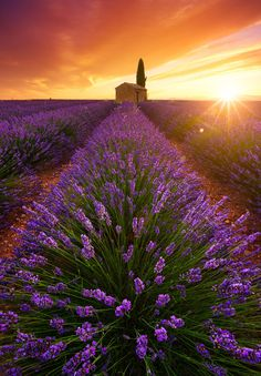 "coiour-my-world: ""Soul of Provence (France) ~ Beboy Photographies """