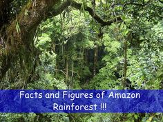 #Amazing_#Facts and Figures of The #Amazon #Rainforest http://ibeebz.com