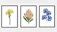 3set Flower Herbs Wall Art Print Set/Botanical Herb Prints/Decor Illustrations/A4 A3/Watercolor flower Print/plant painting/ by AllThatArtVille on Etsy