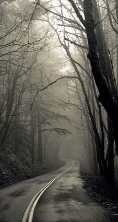 Two roads diverged in a wood, and I— I took the one less traveled by. -Robert Frost