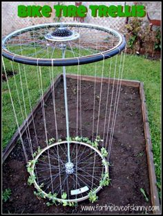 Bike tire trellis - exactly what I want to do with wheels from an old wheel barrow.