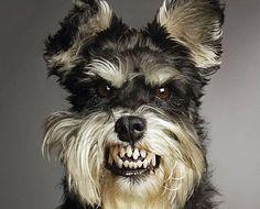 attention, je mord #dog